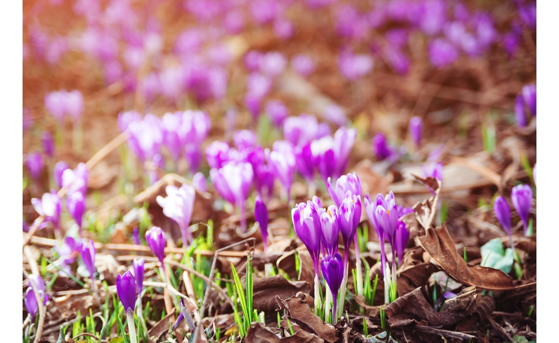 Getting to Know Saffron, the 'Spice King' of the World